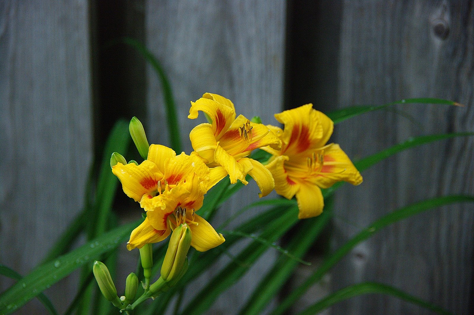 The Blog Bog Of The Tundra The Day The Lilies Bloomed